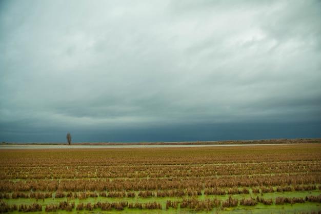 Piękny krajobraz pola ryżowego w pochmurny dzień