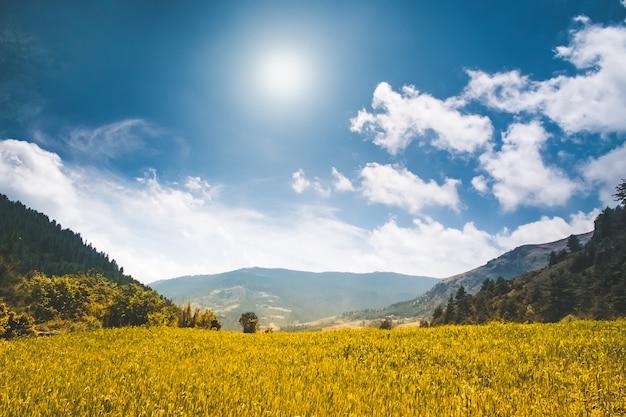 Piękny krajobraz przyrody w letni dzień