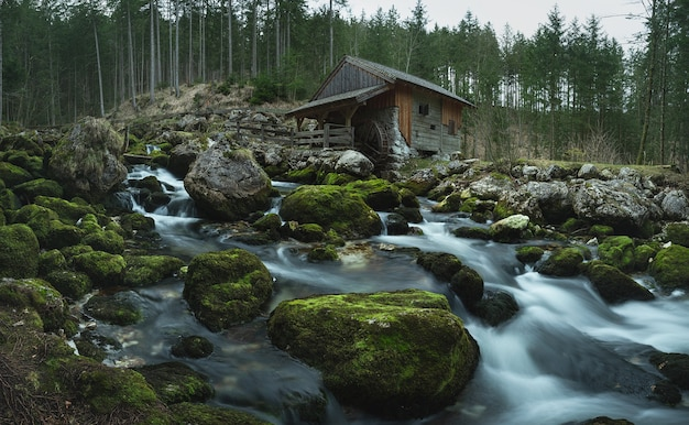 Piękny krajobraz rzeki i lasu w pobliżu młyna