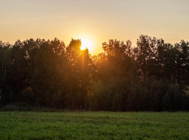 Piękny krajobraz słońca podczas zachodu słońca, chowając się za drzewami. piękno koncepcji natury.