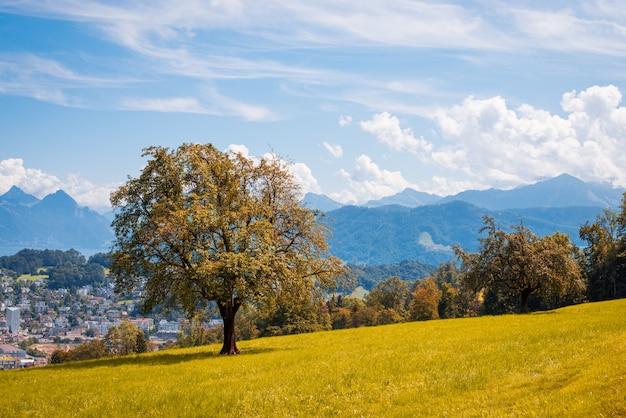 Piękny krajobraz szwajcarskich alp. osamotniony jesieni drzewo przeciw miasteczku z górą