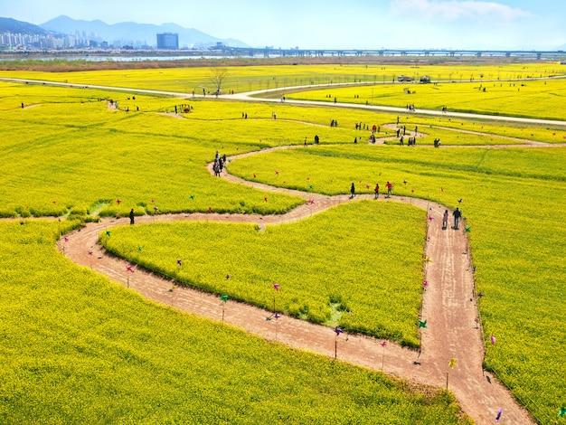 Piękny krajobraz w kształcie serca pola kwiatów rzepaku żółty.