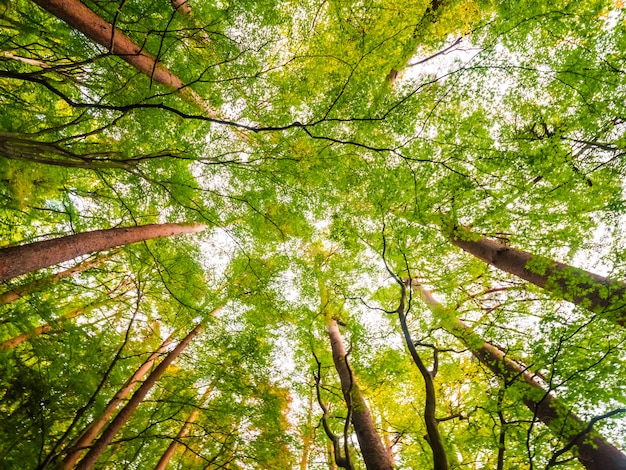 Piękny krajobraz wielkiego drzewa w lesie z niskim widokiem anioła
