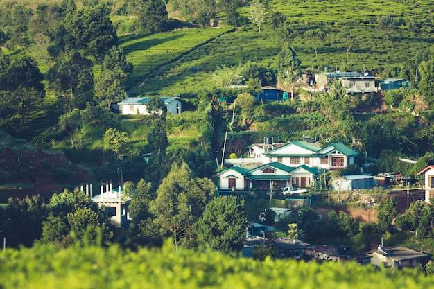 Piękny krajobraz z cejlonu. plantacje herbaty i starożytne domy