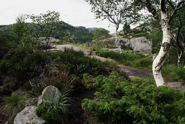 Piękny krajobraz z drzewami i roślinami zielonymi w preikestolen, stavanger, norwegia