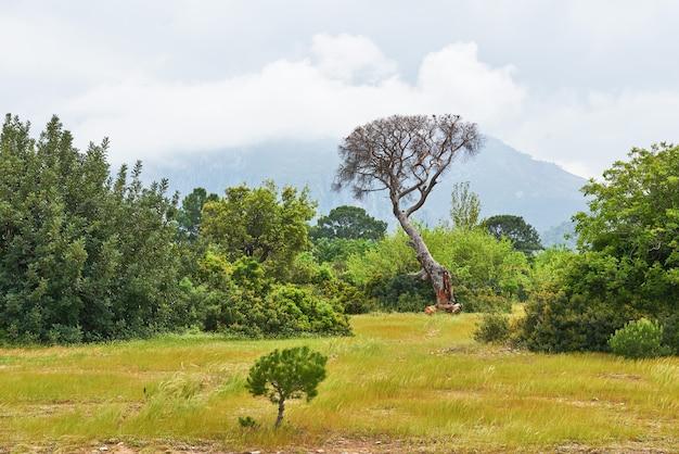 Piękny krajobraz z drzewami na trawniku w górach.