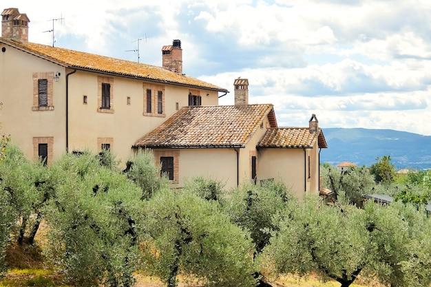 Piękny krajobraz z drzewami oliwnymi i domem we włoskiej wsi