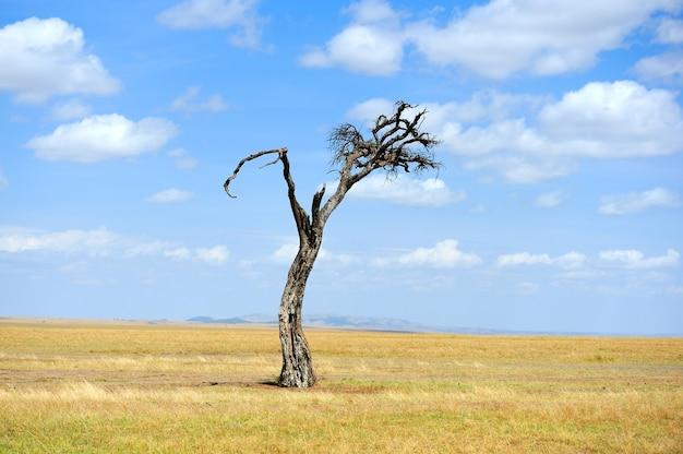 Piękny krajobraz z drzewem w parku narodowym kenii, afryka