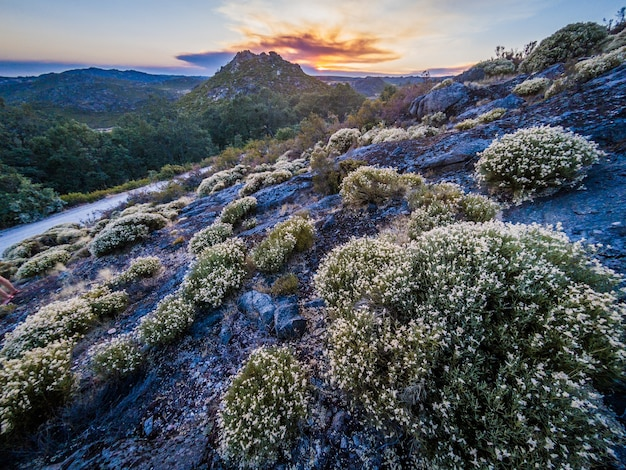 Piękny krajobraz z dużą ilością krzewów w parku przyrody montesinho