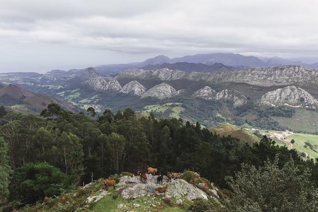 Piękny krajobraz z górami w ciągu dnia