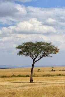 Piękny krajobraz z jednym drzewem w afryce