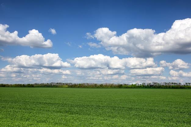 Piękny krajobraz z kontrastującymi chmurami i zielonymi polami
