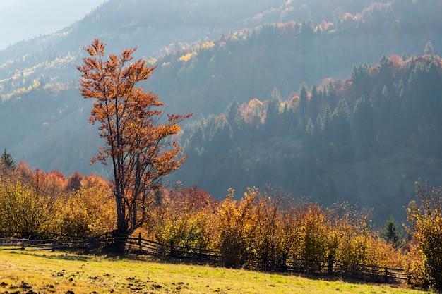 Piękny krajobraz z magicznymi jesiennymi drzewami i opadłymi liśćmi w górach