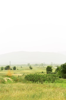 Piękny krajobraz z mgłą
