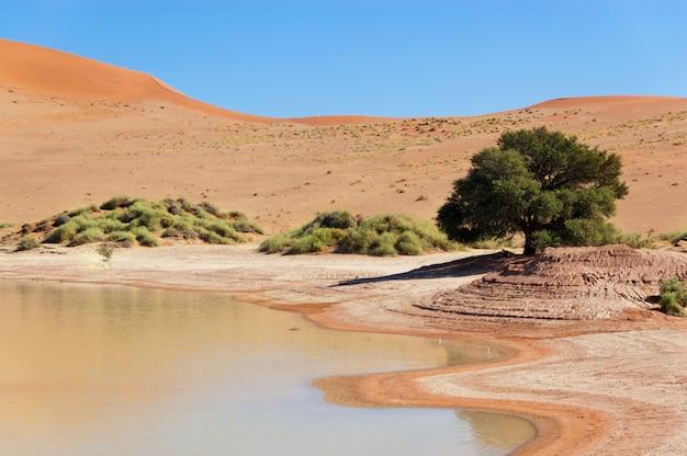 Piękny krajobraz z pustynnych wydm namib, jeziora i drzewa. sossusvlei, namibia, republika południowej afryki