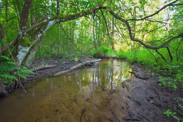 Piękny krajobraz z rzeką w lesie. upadłe gałęzie drzew w rzece.