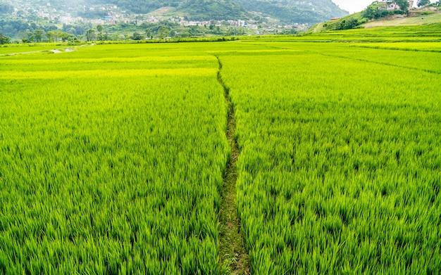 Piękny krajobraz z widokiem na pola uprawne summer paddy khojana lalitpur nepal