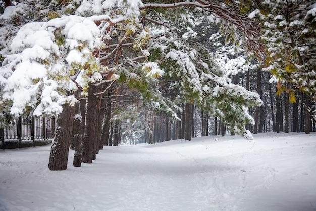 Piękny krajobraz zimowej drogi w lesie