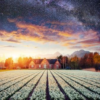 Piękny krajobrazowy nieba pole, hiacynty i.