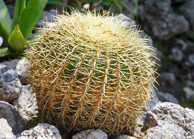 Piękny kształt zielonej rośliny kaktusa