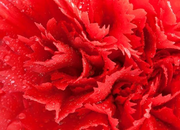 Piękny kwiat czerwony tło