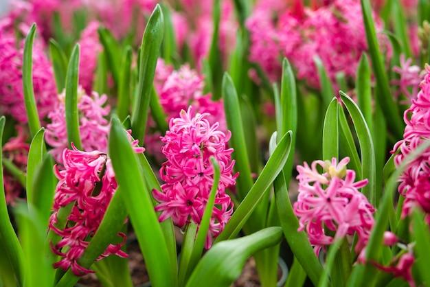 Piękny kwiat kwitnący w ogrodzie