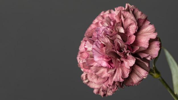 Piękny kwiat kwitnął makro