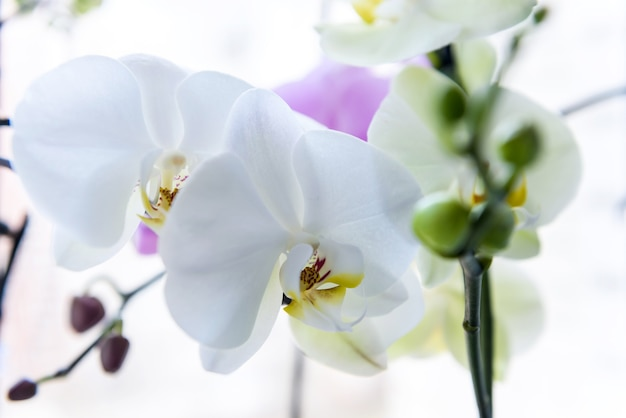 Piękny kwiat orchidei na zielony brunch z bliska