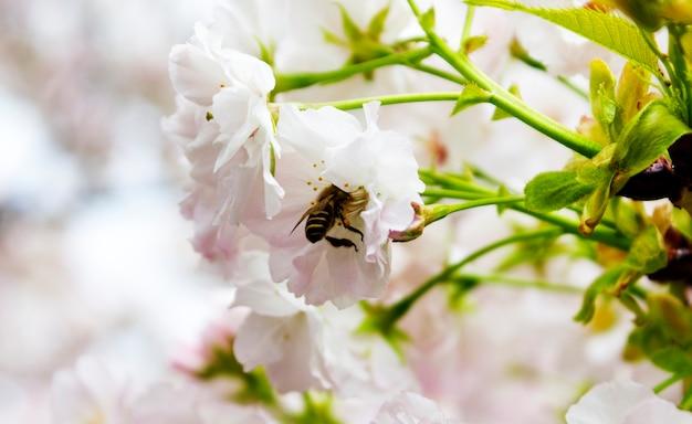 Piękny kwiat pszczoła widlife styl życia naturalny