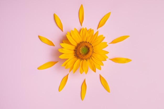 Piękny kwiat słonecznika otoczony żółtymi płatkami na różowym tle. lato to czas słońca i podróży. re