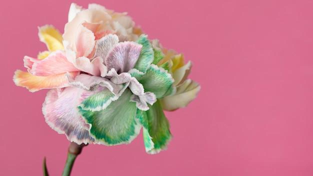 Piękny kwiat z bliska