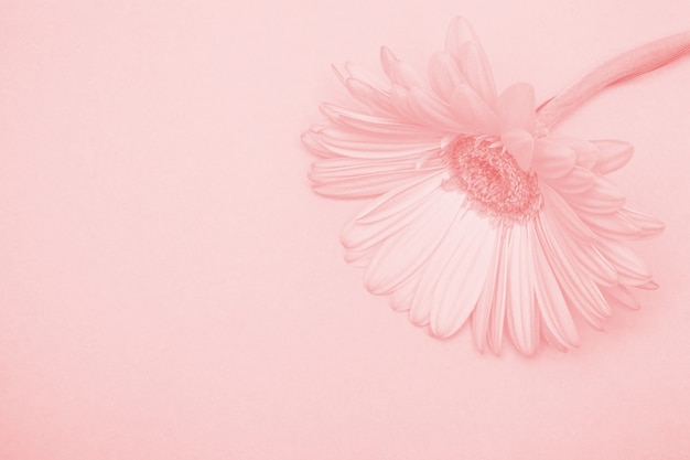Piękny kwiat z tonizacją. kompozycja kwiatowa
