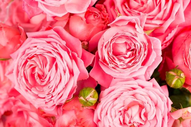 Piękny kwiatowy kwiat tło - różowy kwiat róży tło bukiet