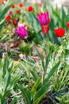 Piękny Kwietnik Na Wiosnę. Natura Wielobarwne Tło. Premium Zdjęcia