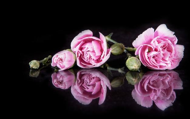 Piękny kwitnący goździka kwiat na czerni