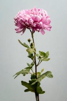Piękny kwitnący kwiat różowy