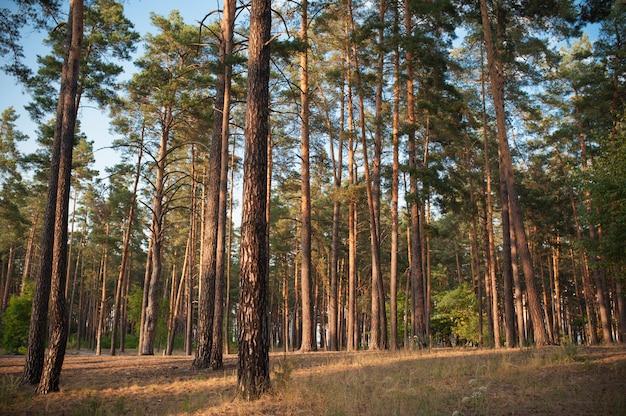 Piękny las jesienią w lecie