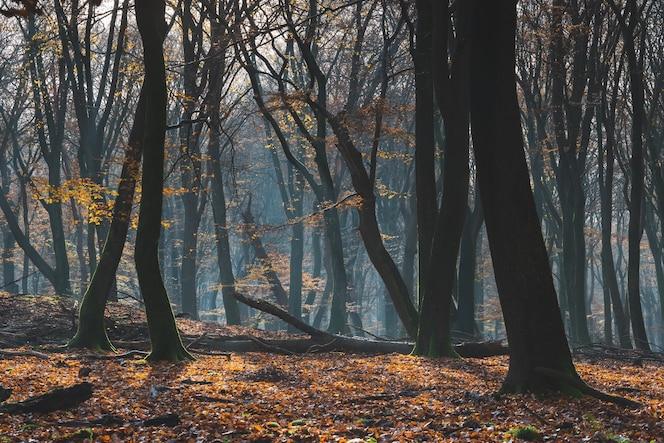 Piękny las jesienią z ziemią pokrytą kolorowymi liśćmi