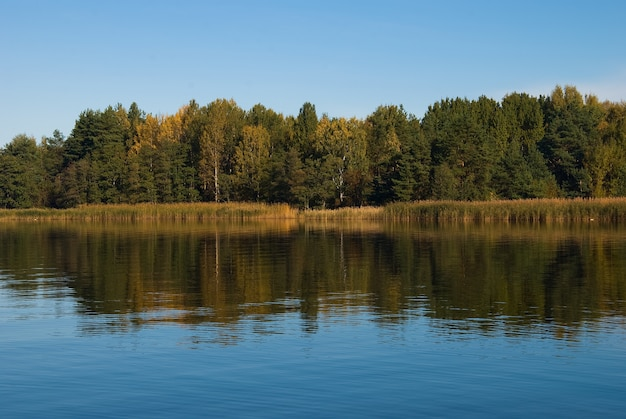 Piękny las na wybrzeżu zatoki