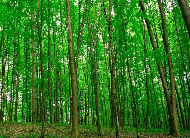 Piękny las o poranku