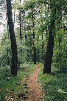 Piękny las z zielonymi tonami w kraju basków
