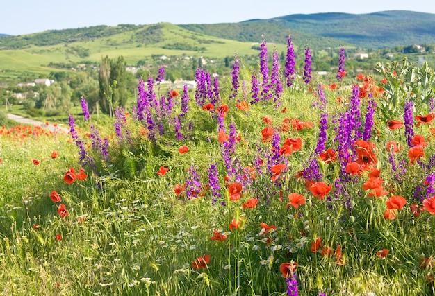 Piękny letni górski krajobraz kraju z czerwonym makiem, białym rumiankiem i fioletowymi kwiatami.
