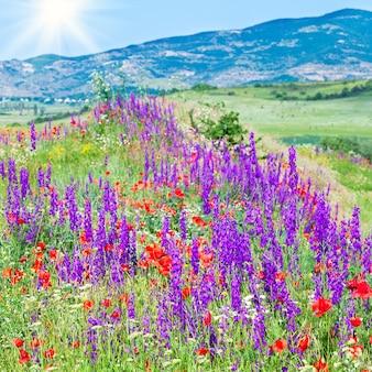 Piękny letni krajobraz górski z czerwonym makiem, białym rumiankiem i fioletowymi kwiatami (i słońcem)