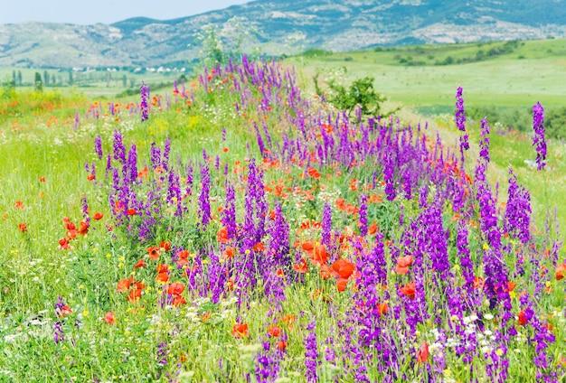 Piękny letni krajobraz górski z czerwonym makiem, białym rumiankiem i fioletowymi kwiatami.