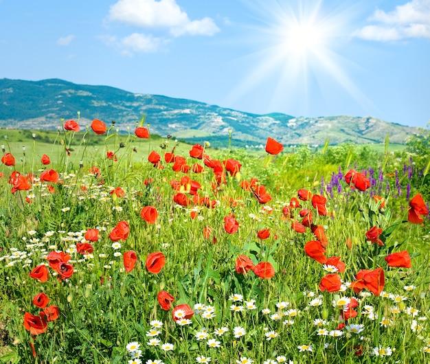 Piękny letni krajobraz górski z czerwonym makiem i białymi kwiatami rumianku (i słońcem)