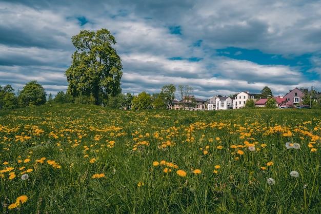 Piękny letni krajobraz wsi z zieloną łąką