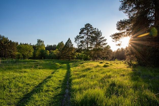 Piękny letni krajobraz z leśną drogą, zachodem słońca i promieniami słońca wśród zielonych drzew. rosja, region włodzimierza