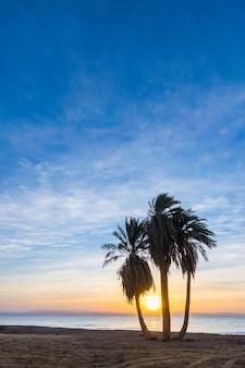 Piękny letni krajobraz z palmami na plaży o wschodzie słońca