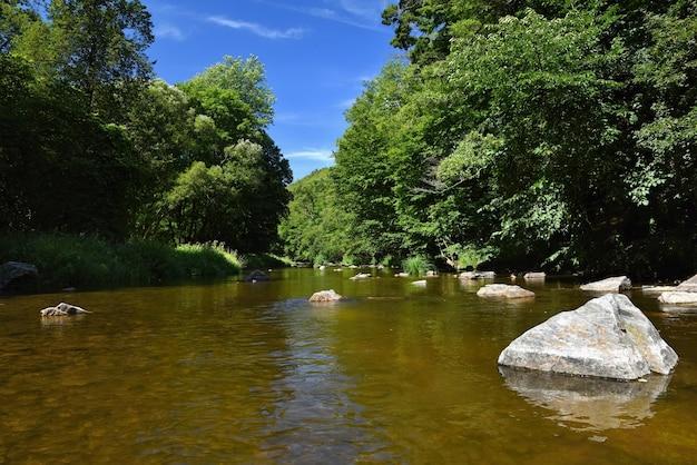 Piękny letni krajobraz z rzeką, lasem, słońcem i błękitnym niebem. naturalne tło.