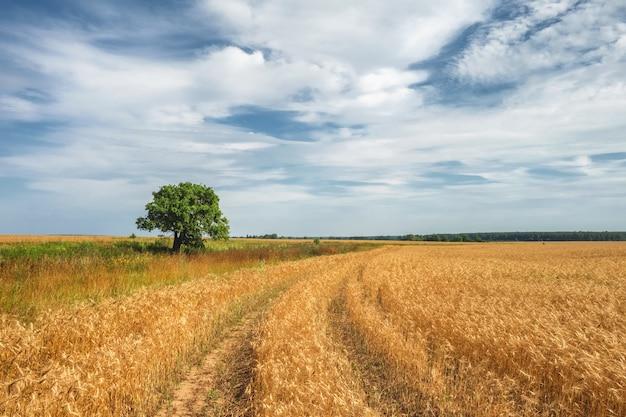Piękny letni krajobraz z widokiem na pole pszenicy, drogę i drzewo w słoneczny dzień